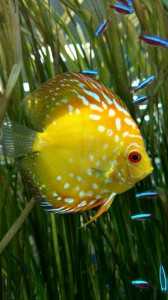 discus store aquarium fish northern va virginia