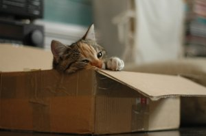 A tiny cat in a moving box being a way to reuse moving boxes after the move
