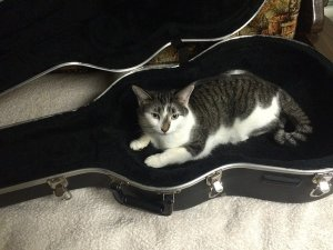 Cat laying in the guitar case