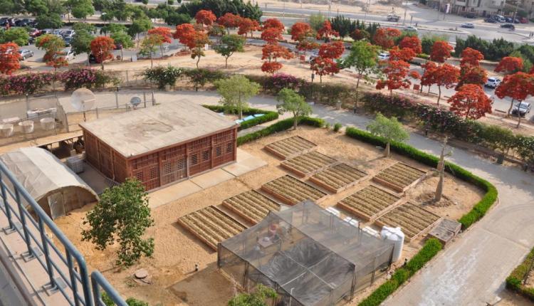 التنمية الريفية