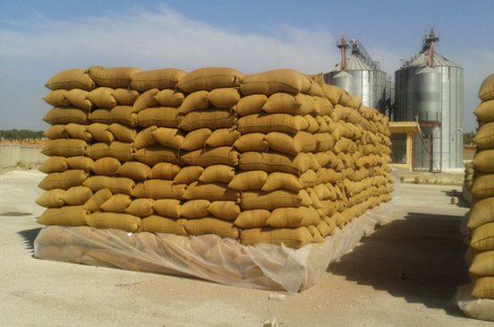 المالية: ١١ مليار جنيه لشراء القمح المحلى حتي الآن.. و ٥ مليارات جديدة قبل نهاية الشهر