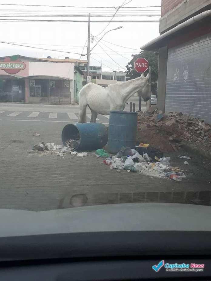 MORADORES RECLAMAM DA FALTA DE COLETA DE LIXO E ANIMAIS SOLTOS EM MARATAÍZES