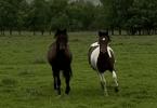 Konji u Trebižatu