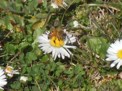 Le api escono a bottinare