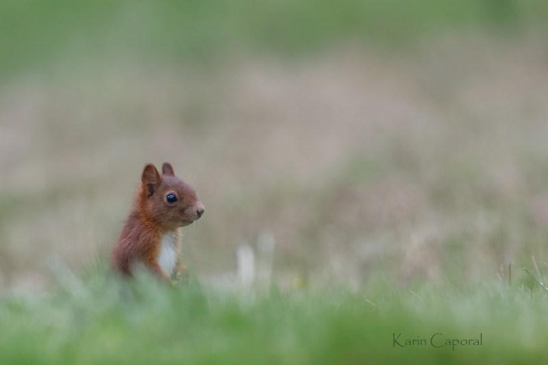 L'écureuil est drôle et facétieux