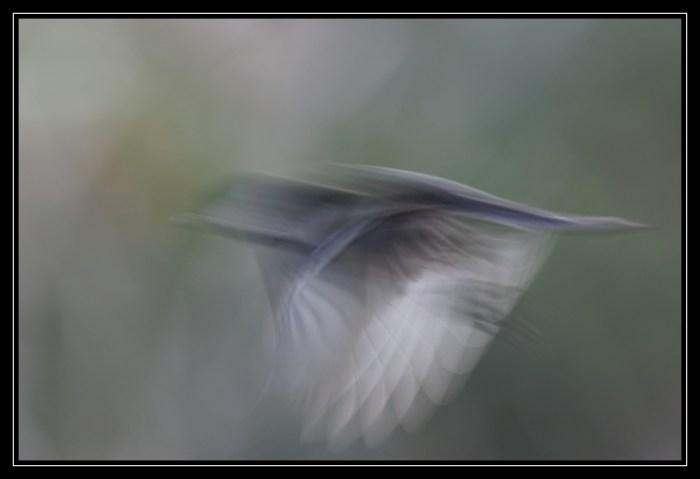 Où s'envole l'âme des oiseaux ?