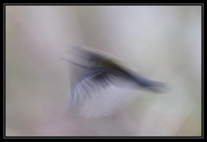Elle s'évapore en un battement d'aile.