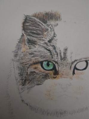 Portrait d'un Chat Forestier - 1