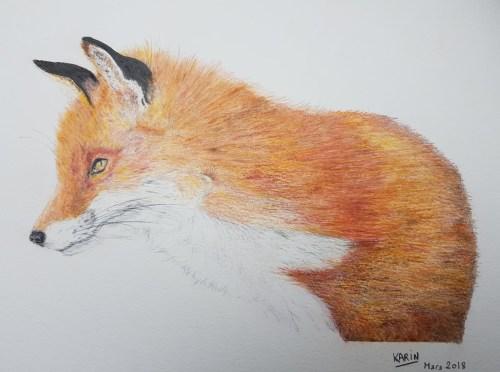 Portrait d'un renard roux - 3