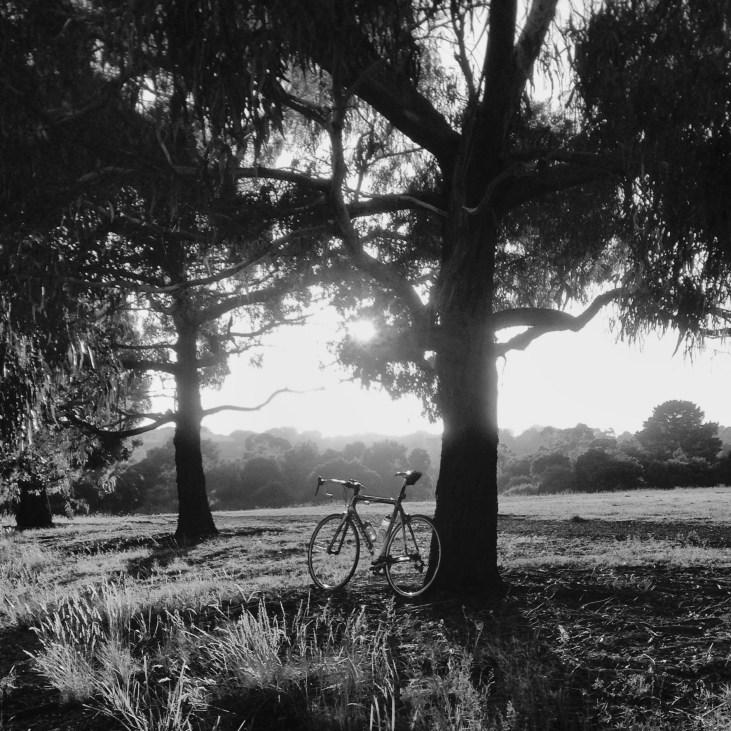 Fry_bike sunrise