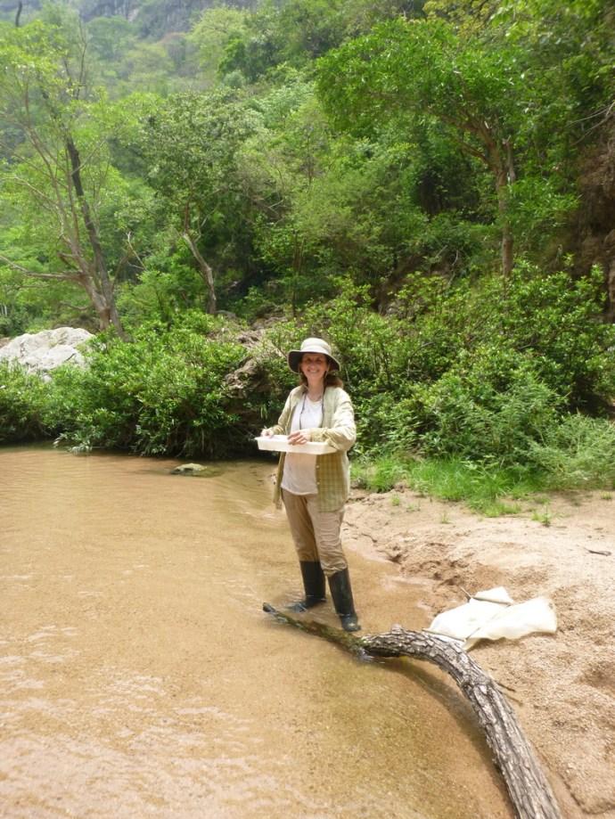 Dr. Maria Mercedes Castillo sampling aquatic invertebrates in a tributary of the Grijalva River in Mexico.