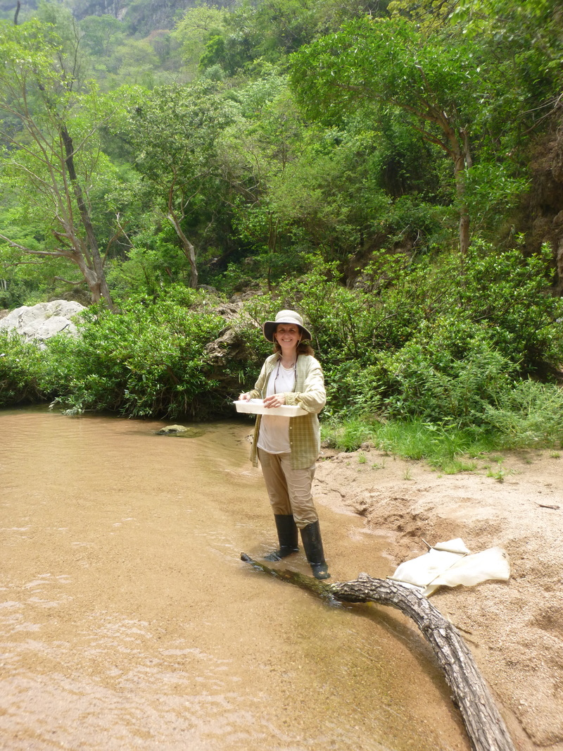 Dr. Maria Mercedes Castillo sampling aquatic invertebrates in a tributary of the Grijalva River in Mexico.