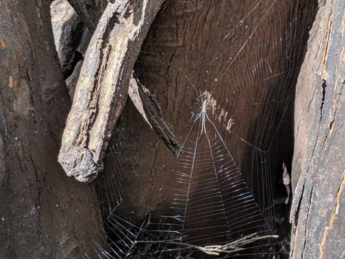 Riparian spiders in southern Georgia