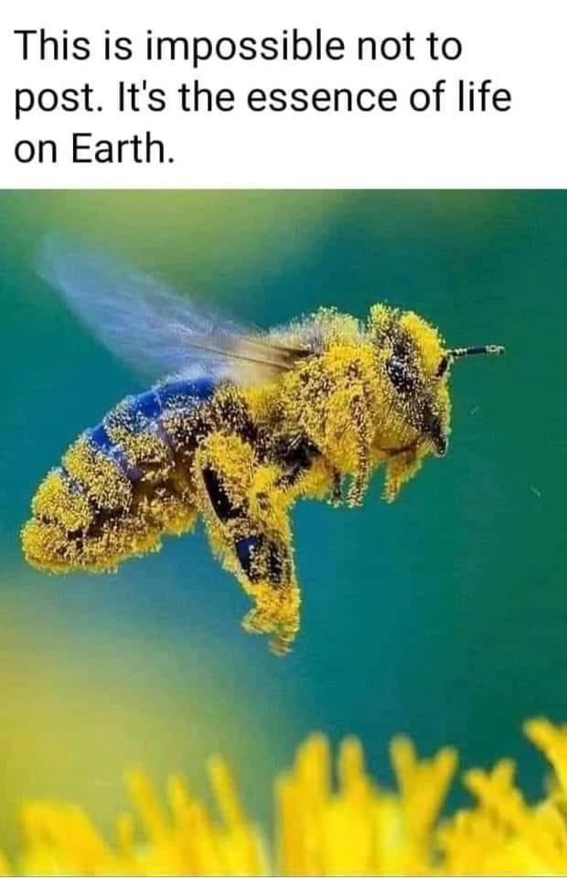 Capricorn Science