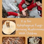 X is for Xylophagous Fungi-Growing our own Mushrooms