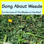 Song About Weeds