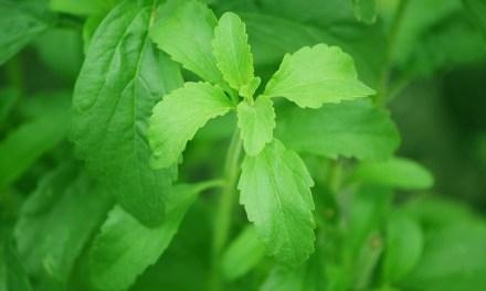 Sunwin Stevia Aktie für den Gesundheitstrend