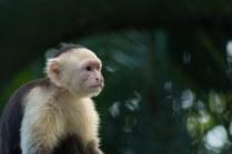 Los_Capuchin_87_13