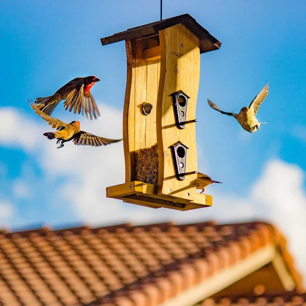 keep birds from pooping on your patio