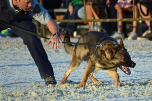 "Policeman restraining a police dog. ""Resistance is futile"" RCMP dog handler controlling his dog. Demonstration at Langley, BC 2013-08-24 Photo by Colin MacGregor Stevens"