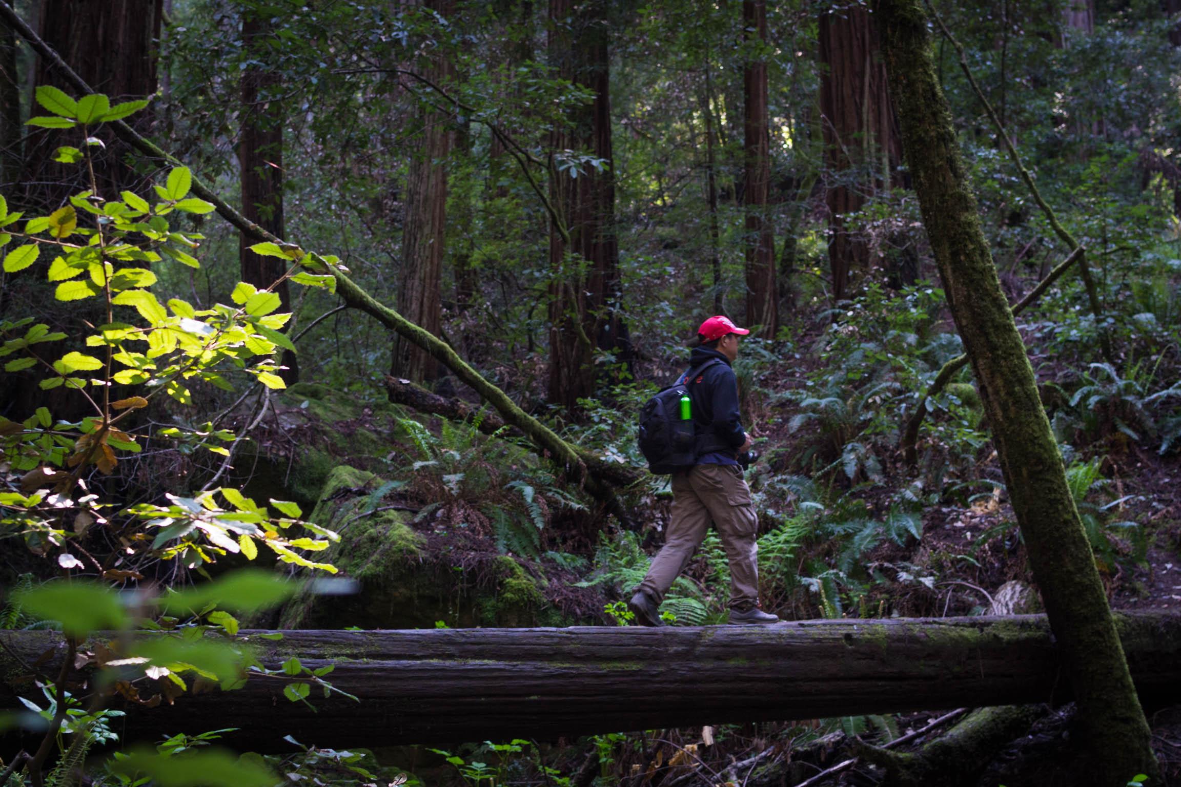 On retrouve des sentiers plus forestiers