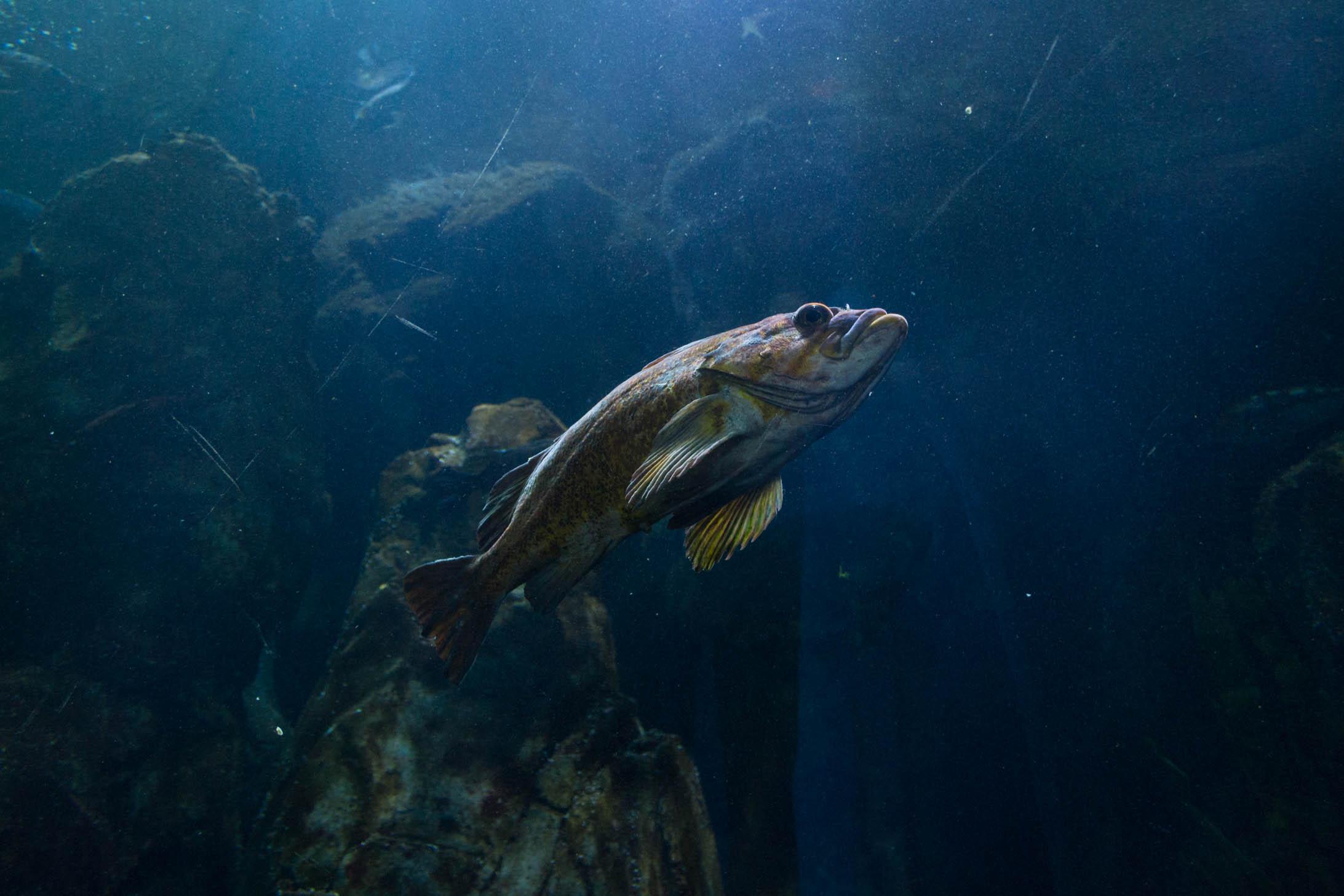 Les poissons ne sont pas faciles à photographier dans les aquariums