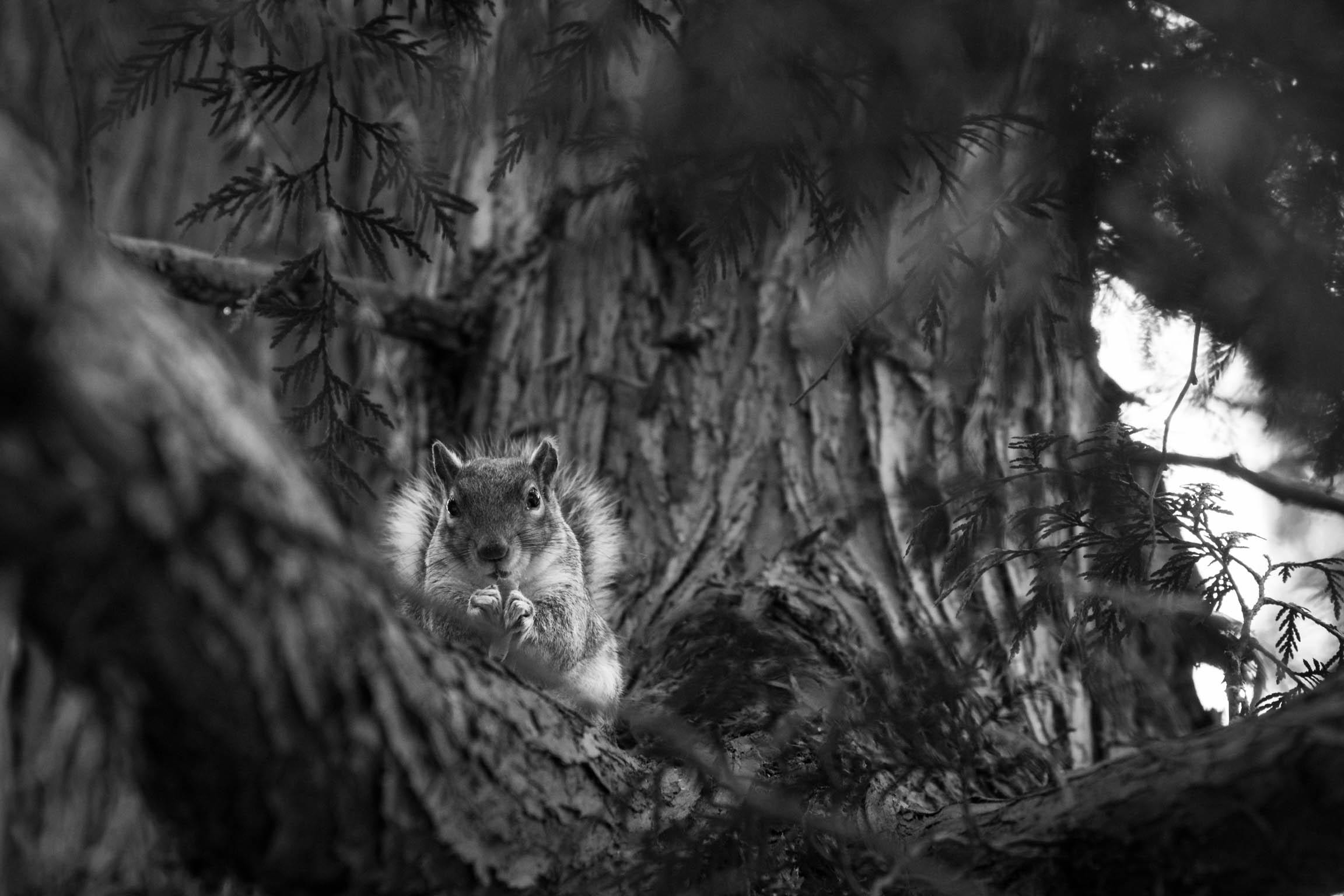 Un écureuil près du Green Lake