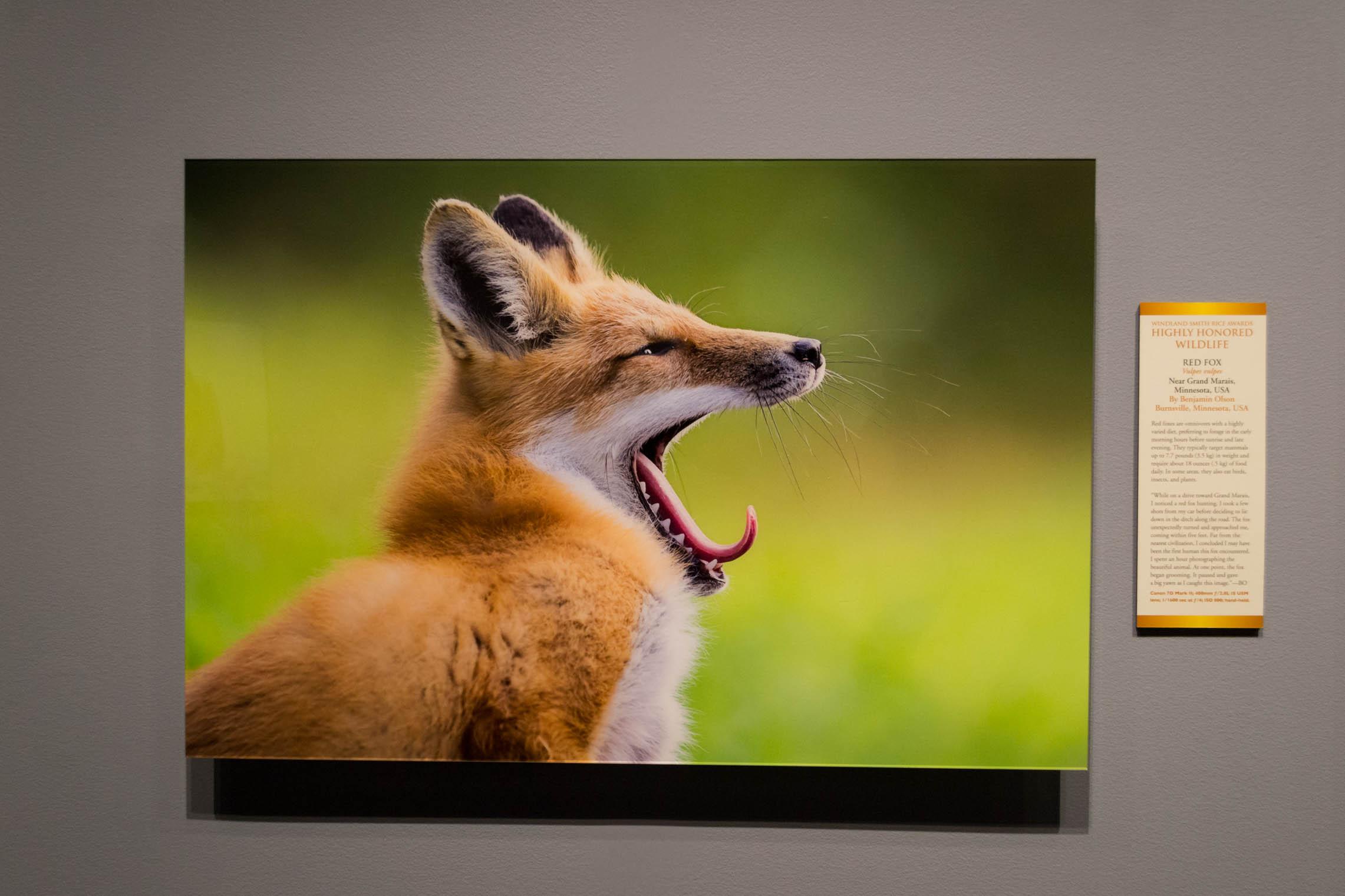 Une des nombreuses images de nature de photographes talentueux