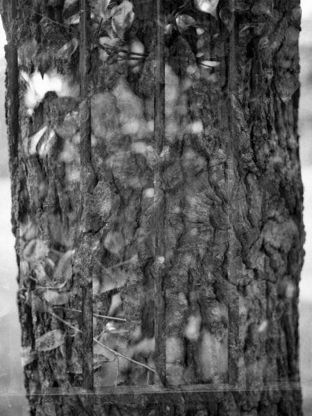 Une double exposition à base de tronc d'arbre et de grillage