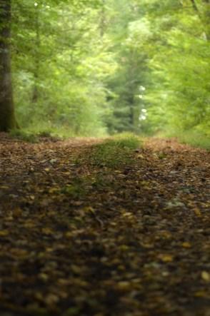 Sentier forêt