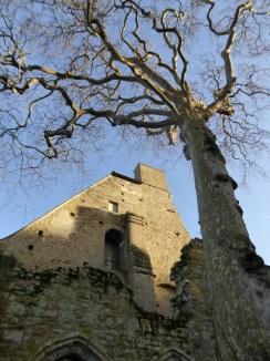 Abbaye de Beauport_janvier 2015 (15)
