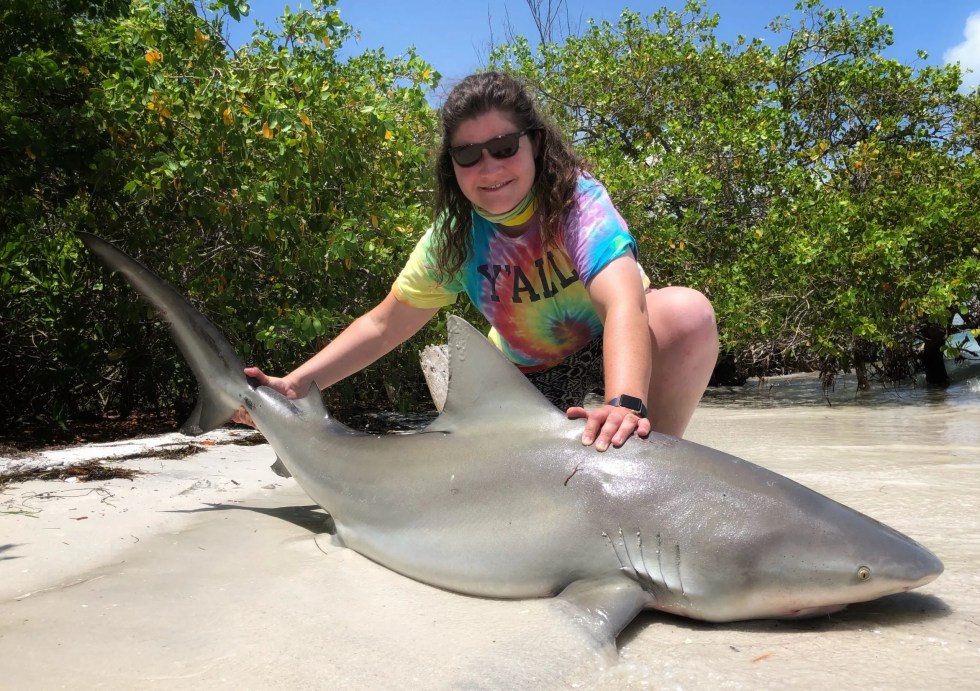 Bull Shark, Sanibel Island Fishing, Catch & Release, Captiva Island, Wednesday, July 8, 2020.