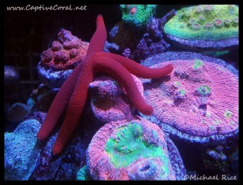 chalice_coral2016-01-17-22-18-41