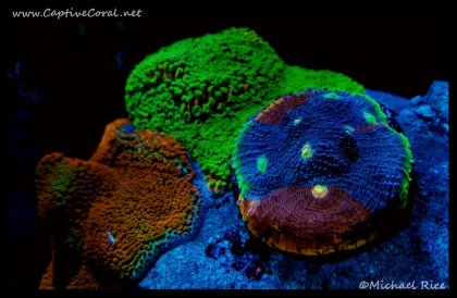 chalice_coral2016-07-17-12-13-33