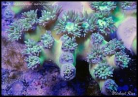 duncan_coral_DSC0126