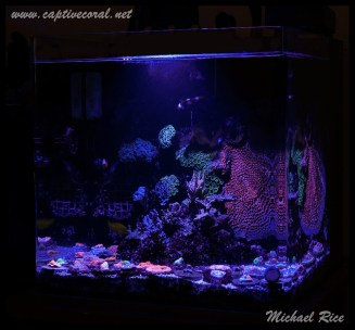 chalice_LPS_nano_reef2015-01-12 21.45.35