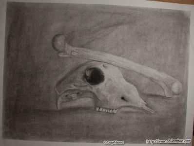 Skull and Cross bone?