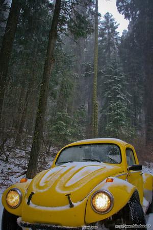 Snowy bug