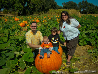 Sincere pumpkin patch