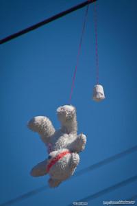 bear, La China Town