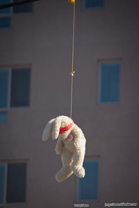 Rabbit, LA China Town