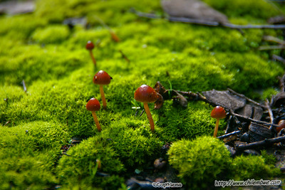 tiny mushrooms