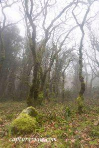 Taller de Fotografía de Paisaje - Parque Natural de los Alcornocales - 01
