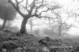 Taller de Fotografía de Paisaje - Parque Natural de los Alcornocales - 06