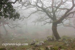 Taller de Fotografía de Paisaje - Parque Natural de los Alcornocales - 17 - M