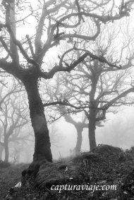 Misterio - Bosque de las Nieblas - Parque Natural de los Alcorno