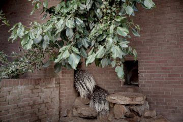 Artis-Zoo-Amsterdam-Bas-Uterwijk Capture Amsterdam