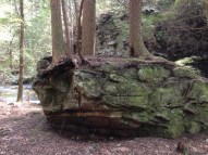 I can't believe the trees can grow on this rock!
