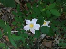 Lots of wildflowers in bloom