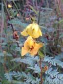 Flowers along levee